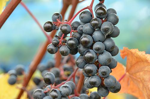 fladie-mat-vingard-vinskord-rondo
