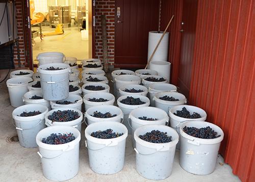 fladie-mat-vingard-vinskord-vineriet